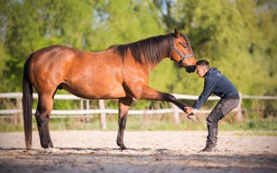 Medo Horse + Dog Tierphysiotherapie jetzt auch in Ihrer Stadt – Cottbus